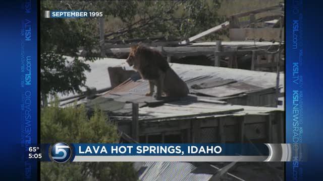 Ksl Com Cars >> Unlike Ohio, Utah law strictly prohibits dangerous animals | KSL.com