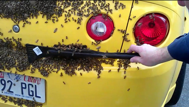 Ksl Com Cars >> Bee swarm takes over Tooele family's car | KSL.com