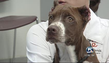 Dog Ear Cropping In Utah